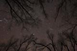 Starry Night in Missouri