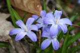 Les premières fleurs du printemps...