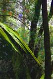 Moss  & Trees