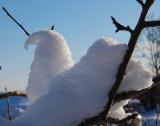 Snefuglen på kort visit