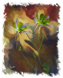Columbine Oil by Bob Bowser - March 2009