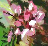 Bari's Bloom by Alcar - Jan 2010
