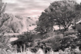 Black & White Landscape by Karen G  - Dec 2007