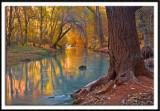 Golden Reflection On Havasu Creek