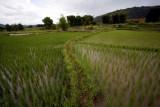 Rice Paddy Photo 1, Xieng Kouang, Laos