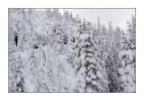 Paysage de neige Monts Valins