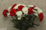 Red & white flowers / Fleurs rouges et blanches