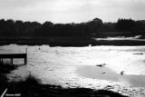09-11-2007 : Low tide / Marée basse