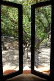 window at banyon