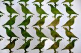 quails birds