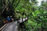 start of Hawaii Tropical Botanical Garden