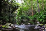 plants in Waipio valley
