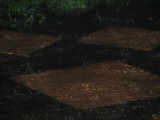 Flooding in My Back yard from the Monsoon 18 March 2008