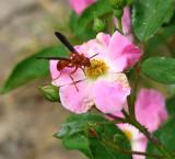 Cool Wasp 23 April 2008