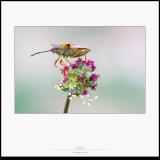 Insectes i aranyes · Macrofoto