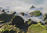 Point Isabel Dog Park scenery - Costco Kindle use March 19