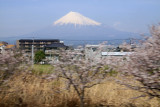 Spring cherry blossoms blurring past Fuji
