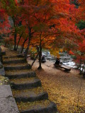 Leaf-covered stone steps