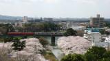 Passing Meitetsu train and sakura