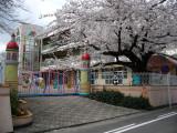 Kindergarten with sakura near Inuyama station