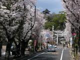 Cherry blossoms at the end of Honchō-dōri