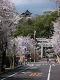 Sakura and the donjon of Inuyama-jō beyond