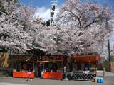 Yatai beneath the sakura