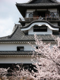Donjon detail with cherry blossom tree