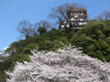 Inuyama-jō and sakura from the riverbank below