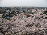 View out the lower floor of the donjon with sakura