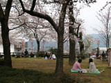 Having hanami in Kasumiga-jō-kōen