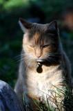 Cat-Dill