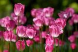 :: flower Variation::