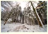Winter 2010 - I