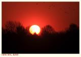 Low Sun - Lage Zon