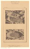 Tafel 9 - Casatus, Klaproth / Blancanus (with overlay)