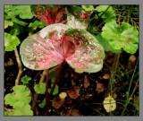 Flower 002.jpeg