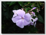 Flower 04.jpg
