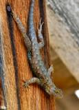 Lizard feet . . .