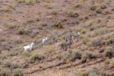 017-b-wild burros-bet-resize.jpg