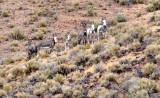 020-b-wild burros-BET-resize.jpg