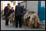 Business of skin sheep