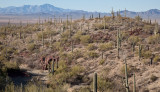 002_Saguaro desert, mountains in distance__7036`1001140839.jpg