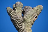 029_Saguaro top formation__7199`1001141313.jpg