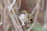036_Hummingbird__7242`1001141416.jpg