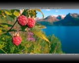 Polar Beginning (1280x1024px, 280Kb)