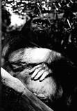 King Diddy Kong