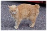 Mr Grumpy No Tail