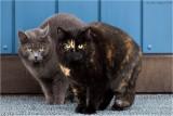 Todays grumpy cats