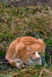 Ginger cat successfully hiding from Bonnie behind a grasstraw...
